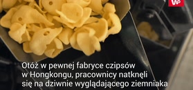 Granat w ziemniakach. Zaskoczenie w fabryce czipsów