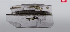 Pierwszy żywy organizm, który się ruszał