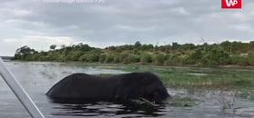 Słoń w kąpieli. Nie spodobało mu się nagrywanie