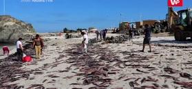 Tysiące martwych mątw na plaży. Sprawą zajęło się wojsko