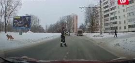 Policjant pomógł psu przejść przez jezdnię