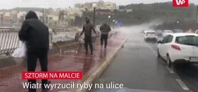 Sztorm na Malcie. Wiatr był tak silny, że wyrzucał ryby na most