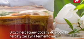 Niezwykłe właściwości grzyba herbacianego