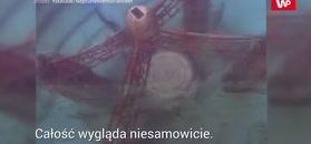 Podwodna nekropolia nieopodal Florydy