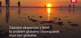 Raport WWF. Zawartość plastiku w oceanach podwoi się do 2030 roku