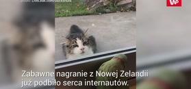 Papuga zakpiła z kota