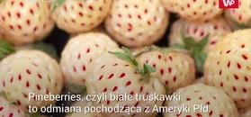 Białe truskawki. Właściwości oryginalnej odmiany