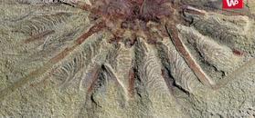 Skamieliny sprzed 500 mln lat. Spektakularne odkrycie u brzegu rzeki