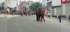 Słoń na ulicach miasta
