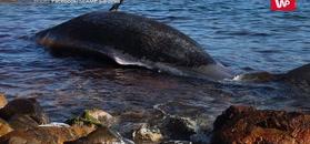 Wyrzuciło ją morze. Mieszkańcy Sardynii wstrząśnięci