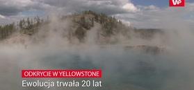 Plama martwych drzew. Ewolucja musiała trwać 20 lat