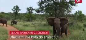 Szarża słonia. Nagranie turysty