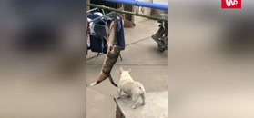Kot, pies i ryba. Konflikt interesów okiem kamery
