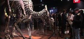Szkielety dinozaurów i kawałek Marsa na sprzedaż