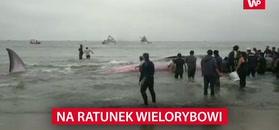 Na ratunek wielorybowi