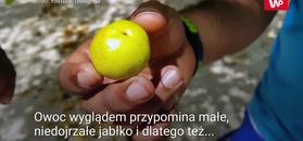 Najbardziej trujący owoc świata
