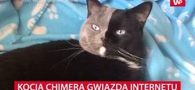 Kocia chimera gwiazdą internetu