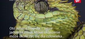 Niesamowity wąż