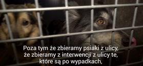 Pudelek odwiedza psi Azyl. Prezes Fundacji Dom dla Kundelka: