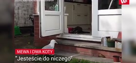 Mewa i dwa koty.