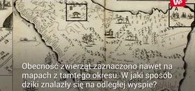 Zdumiewające odkrycie na wyspie. Zagadka sprzed niemal 400 lat wyjaśniona