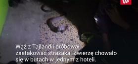 Wąż kontra strażak