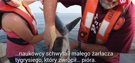 Rekin na nich zwymiotował. Wtedy zrobiło się jeszcze dziwniej