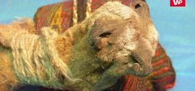 Sakwa szamana sprzed 1000 lat. Naukowcy ją otworzyli i zrobili wielkie oczy