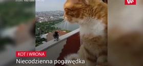 Jak kot z wroną. Komiczne nagranie właściciela