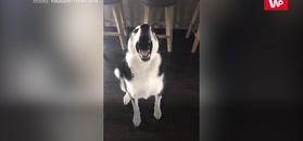 Chciała zbesztać swojego pupila. Reakcja psa to hit internetu