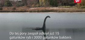 Zbadali DNA Loch Ness. Dokonali zaskakującego odkrycia