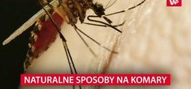 Naturalne sposoby na komary