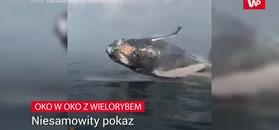 Oko w oko z wielorybem