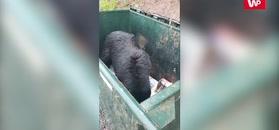 Nakrył niedźwiadka. Reakcja była natychmiastowa