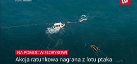 Na pomoc wielorybowi