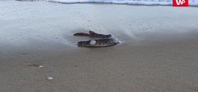 Dziwak na plaży. Wyszedł się poopalać