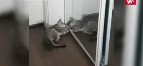 Pierwszy raz zobaczył się w lustrze. Dostał