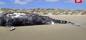 Globalne ocieplenie. Winne śmierci wielorybów