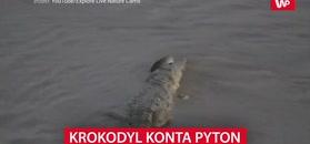 Krokodyl konta pyton