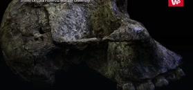Zbadali mleczaki sprzed 3 mln lat. Niezwykłe, co ujawniły