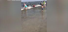 Plażowicze rzucili się do wody. Trzech zwierząt nie udało się uratować