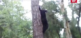Skradał się do niedźwiedzia