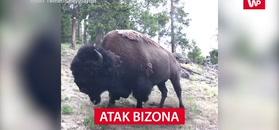 Atak bizona
