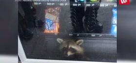 Szop wkradł się do automatu