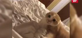 Nałożyła maseczkę i włączyła nagrywanie. Kot zdębiał