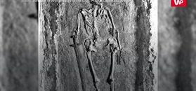 Znaleźli go przez przypadek. Ma co najmniej 1000 lat i